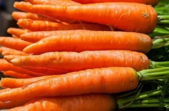 Выращивание моркови: посадка и выбор семян