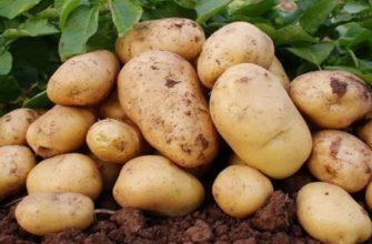 Лучшие способы хранения картофеля на зиму