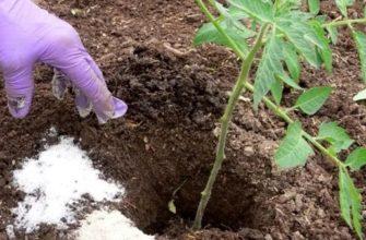 Подкормка томатов в открытом грунте: чем подкормить рассаду