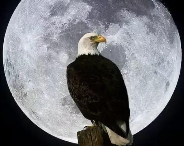 Какая луна ссегодня