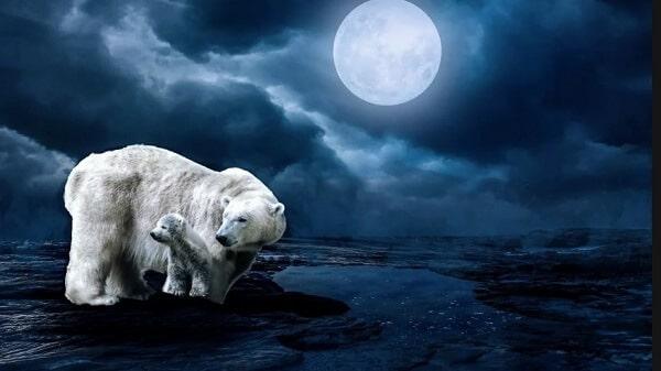 Медведь и луна