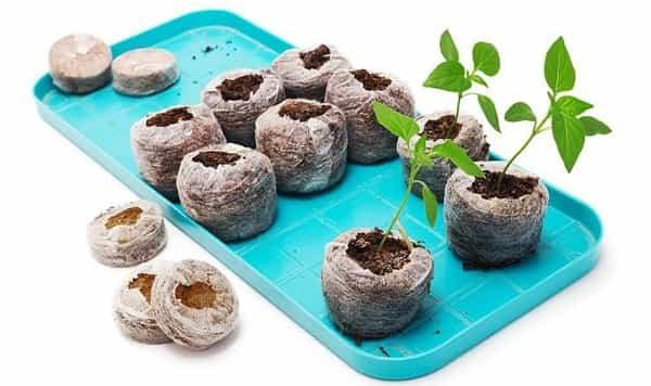 Когда сажать перец на рассаду в 2021 году в таблетках
