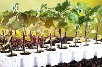 Когда сажать баклажаны на рассаду в 2021 году и как правильно ухаживать в домашних условиях