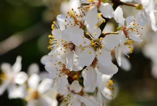 Лунный посевной календарь на май 2019 садовода