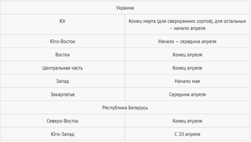 Когда сажать картофель в Украине