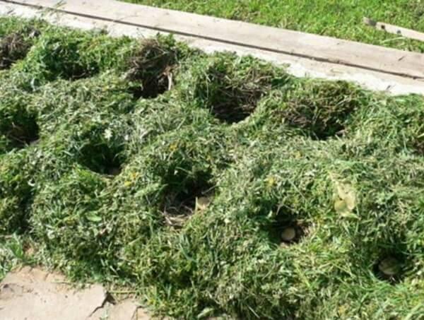 Посадка картофеля под траву