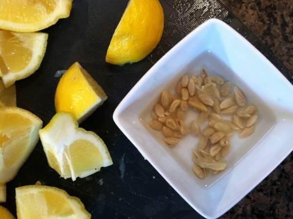 Подготовка косточек лимона для посадки