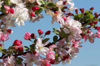 Лунный посевной календарь на май 2020 садовода и огородника
