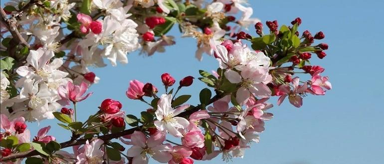 Лунный посевной календарь на май 2021 садовода и огородника