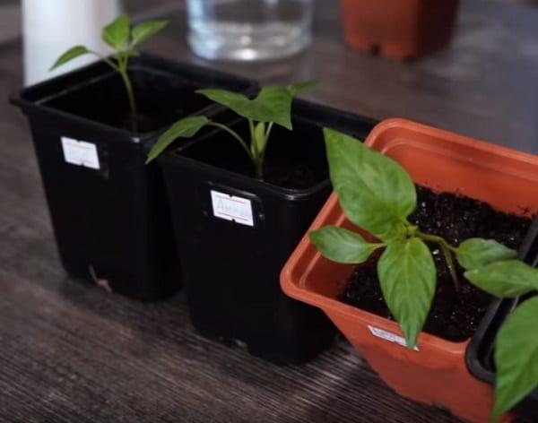 Мочевина как защита для растений на огороде