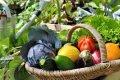 Миниатюра к статье Лунный календарь на июль 2018 года садовода и огородника, цветовода