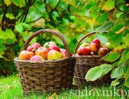 сад огород осенью