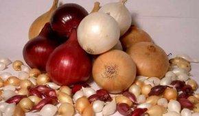 Миниатюра к статье Выращиваем лук-севок: секреты посадки и лучшие сорта