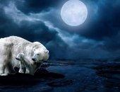 Миниатюра к статье Какая луна сегодня 12 декабря 2017 года: растущая или убывающая