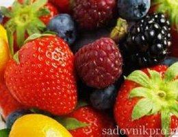 ягодные культуры