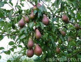 Как бороться с вредителями садовых деревьев